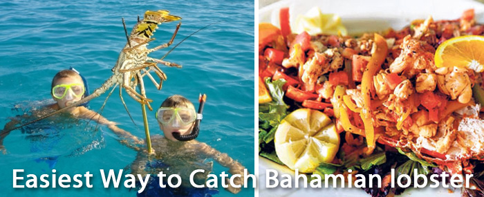 Catching Bahamian lobster from Your Private Luxury Yacht Charter